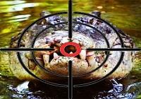 thumbnail_image5d397ba7f1b59.jpg